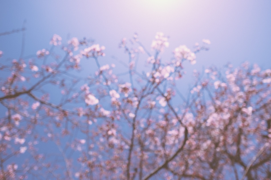 Blurry cherry blossoms in Mitaka