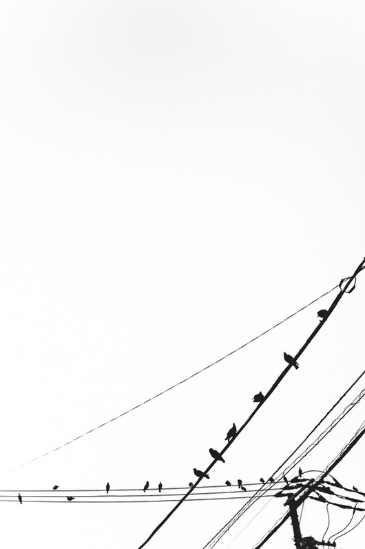 birds sitting on wire