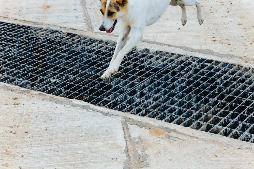 dog jumping over grate