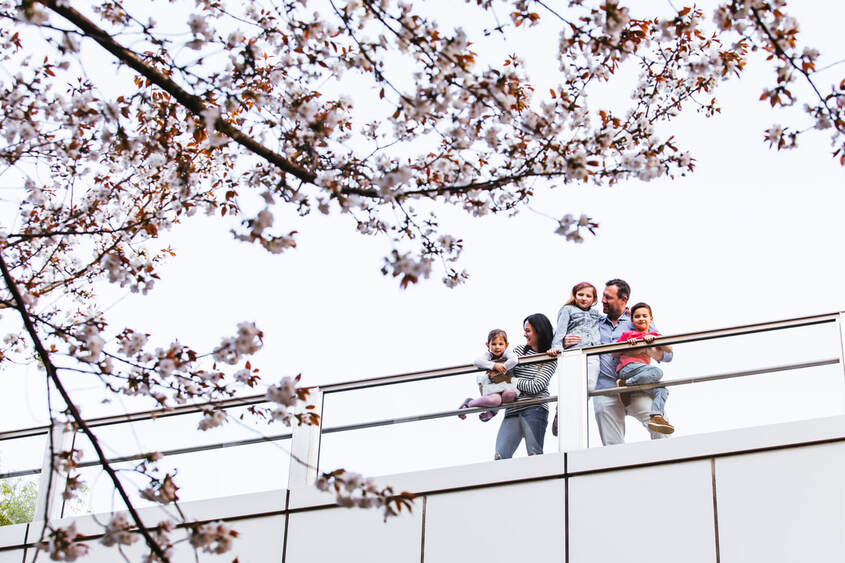 family under sakura trees